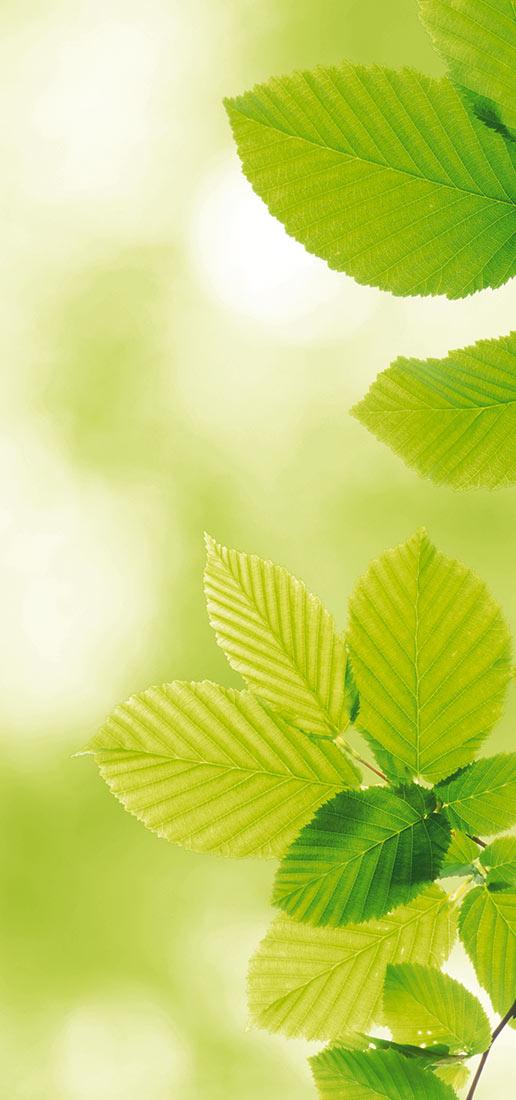 Sostenibilidad y responsabilidad ambiental